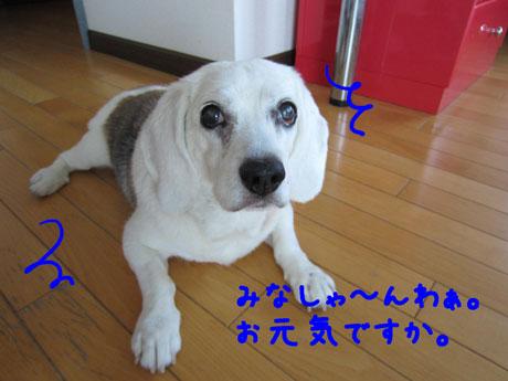 2_20110630104119.jpg
