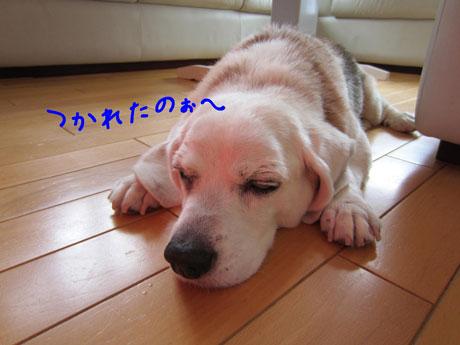 2_20110701193132.jpg