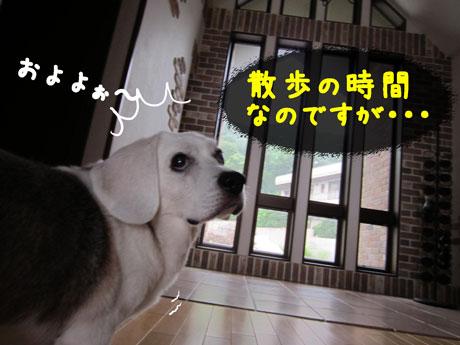 2_20110704172433.jpg