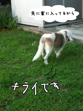 2_20110712160123.jpg