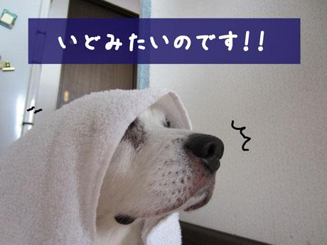2_20110719163809.jpg