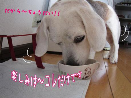 3_20110529121419.jpg