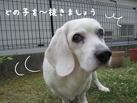 3_20110531123516.jpg