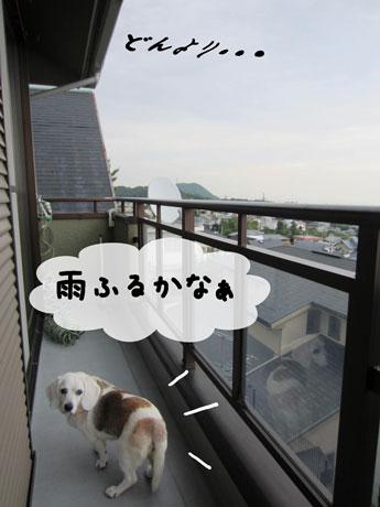 3_20110608151127.jpg