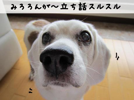 3_20110609145130.jpg