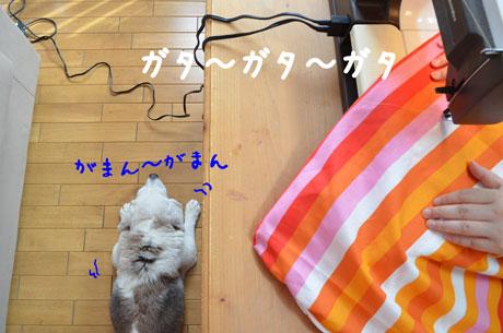 3_20110624161241.jpg
