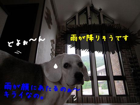 3_20110704172433.jpg