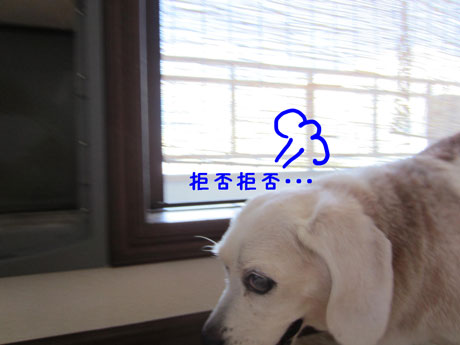 3_20110710160946.jpg