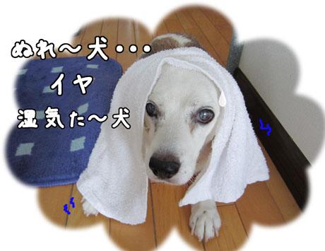 3_20110719163808.jpg