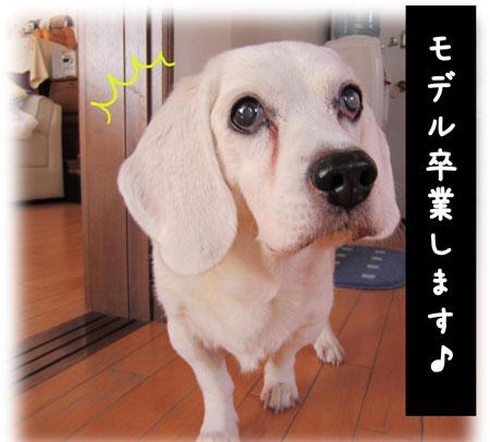 3_20111101125631.jpg