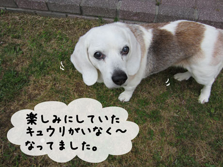 4_20110527181600.jpg