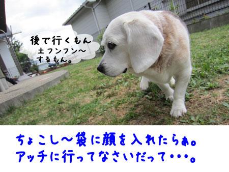 4_20110531123516.jpg