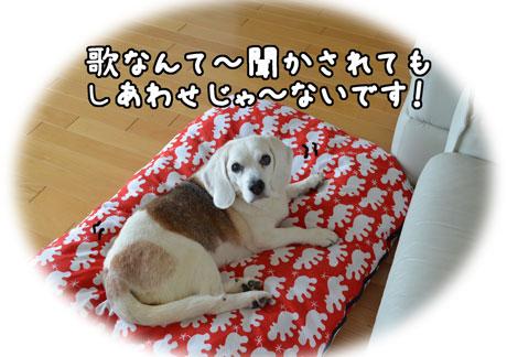 4_20110601131938.jpg