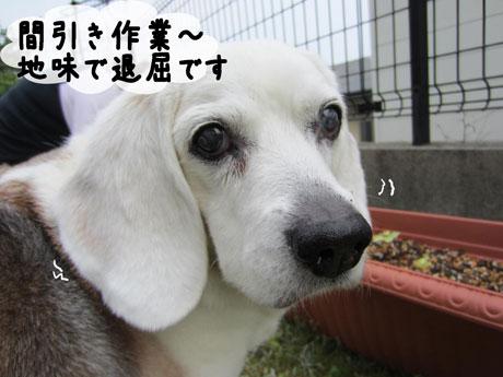 4_20110605174405.jpg