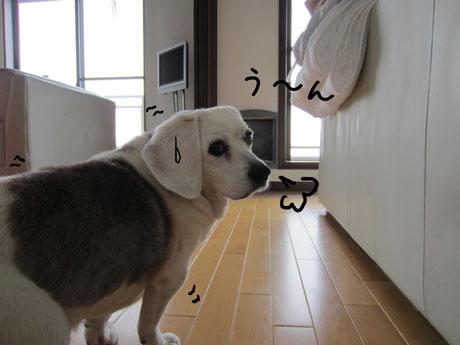 4_20110608151925.jpg