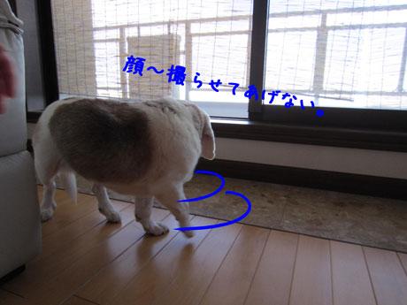 4_20110710160946.jpg