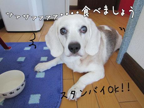 4_20110716163229.jpg