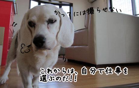 4_20111101125631.jpg