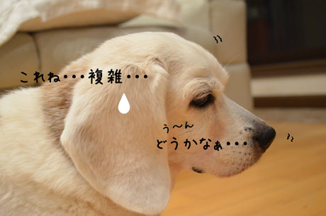 4_20120105193719.jpg