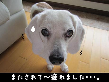 5_20110609145129.jpg