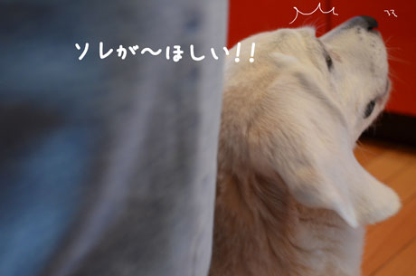 5_20110613004758.jpg