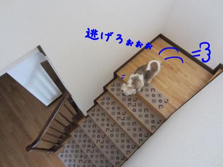 5_20110710160946.jpg