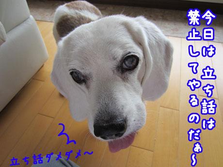 6_20110609145129.jpg