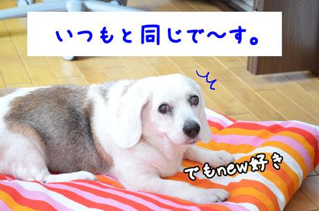 7_20110624161259.jpg