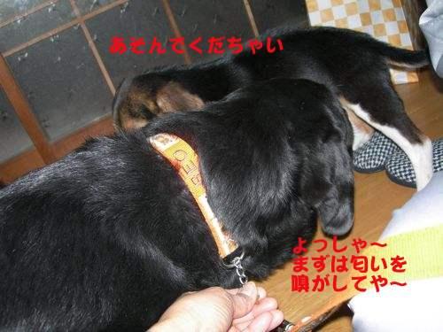 DSCN5105.jpg