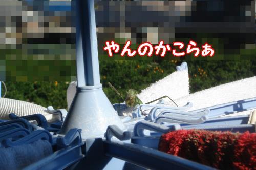 DSC09081_convert_20111125213333.jpg