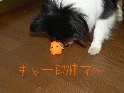 今日も戦うタマオレンジ