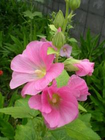 夏の庭 (10)
