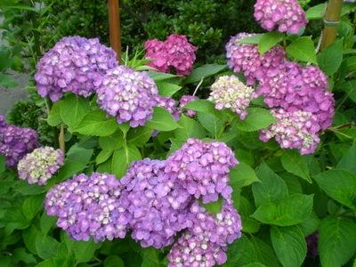 夏の庭 (5)