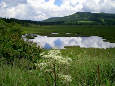八島湿原 (15)