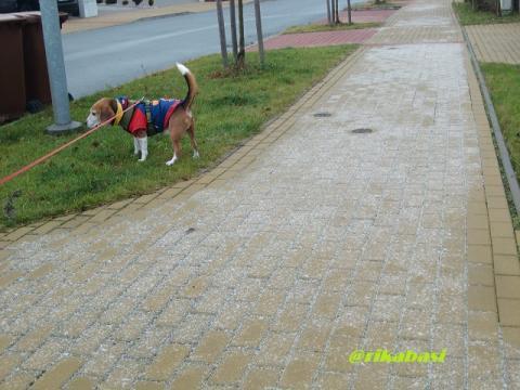 CIMG0154_20111207070636.jpg
