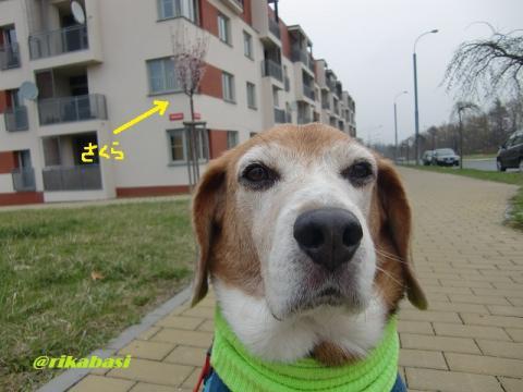 CIMG3096_20120408013415.jpg