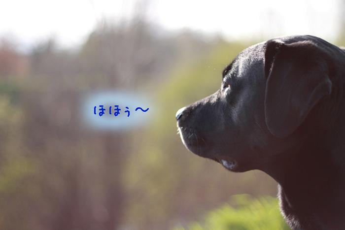 20110504-003.jpg
