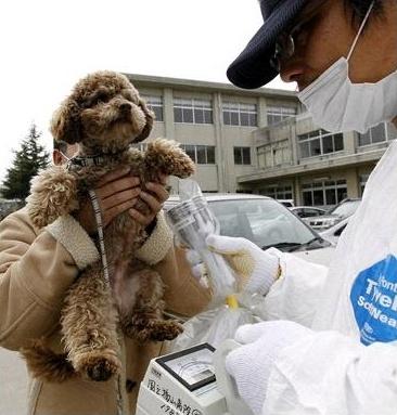 福島県郡山市の避難所で、ペット犬の放射線レベルを測定する担当者(2011年3月20日撮影)
