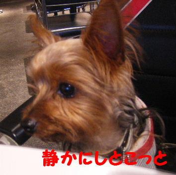 2007_11050013.jpg