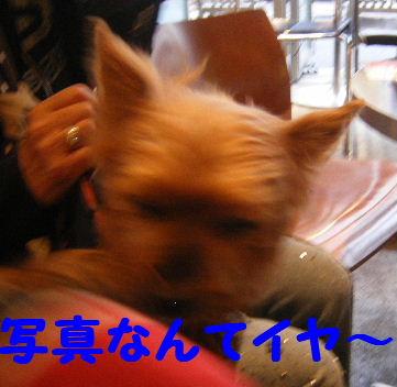2007_11050017.jpg