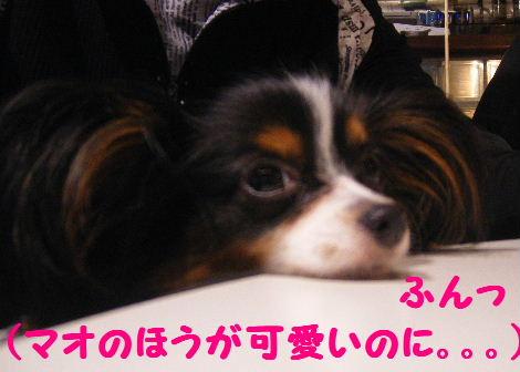 2007_11050019.jpg