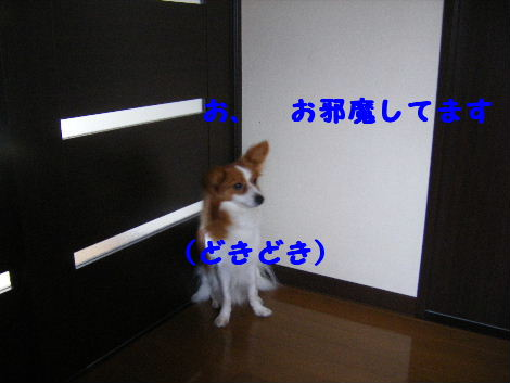 2008_01310001.jpg