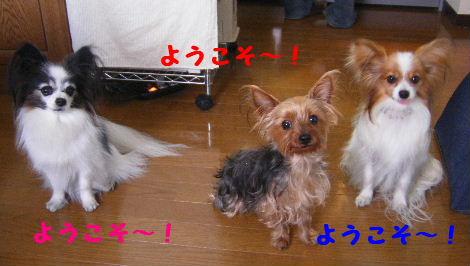 2008_01310002.jpg