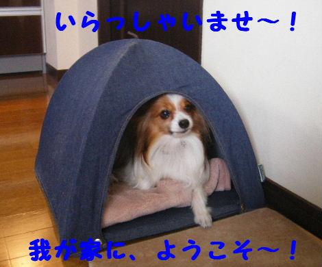2008_01310003.jpg