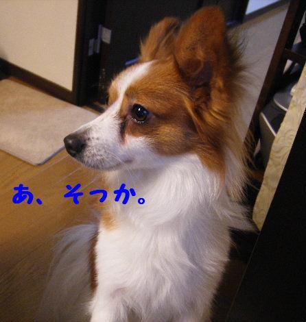 2008_01310009.jpg