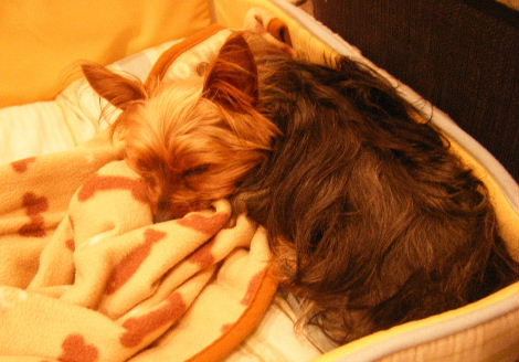 2008_01310010.jpg