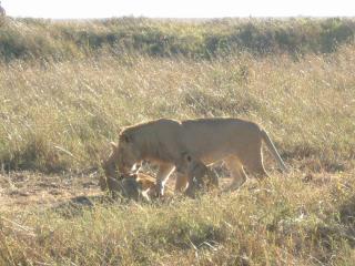 lion_family.jpg