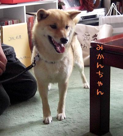 CIMG0130_edited.jpg