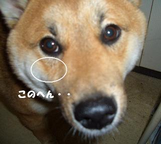 CIMG1902_edited.jpg