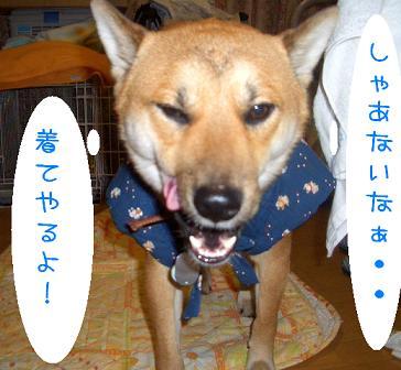 CIMG3895_edited.jpg